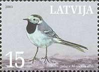 Фауна, Национальная птица Латвии – белая трясогузка, 1м; 15c