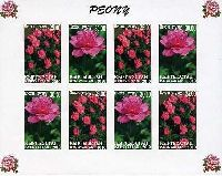 Флора, Пионы, беззубцовый М/Л из 4 серий