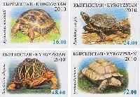 Фауна, Черепахи, 4м беззубцовые; 16, 24, 48, 72 C