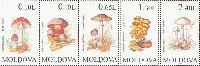 Флора, Грибы, 5м; 4, 10, 20, 90, 180 бань