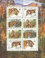 WWF, Уссурийские тигры, М/Л из 2 серий